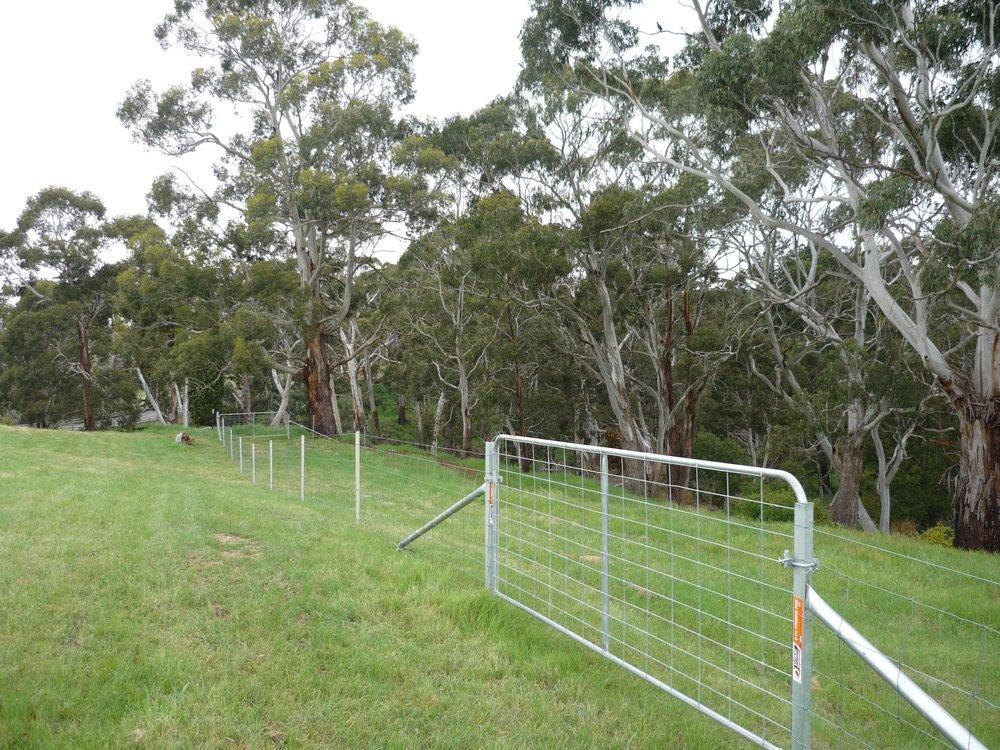 Riparian fencing.jpg