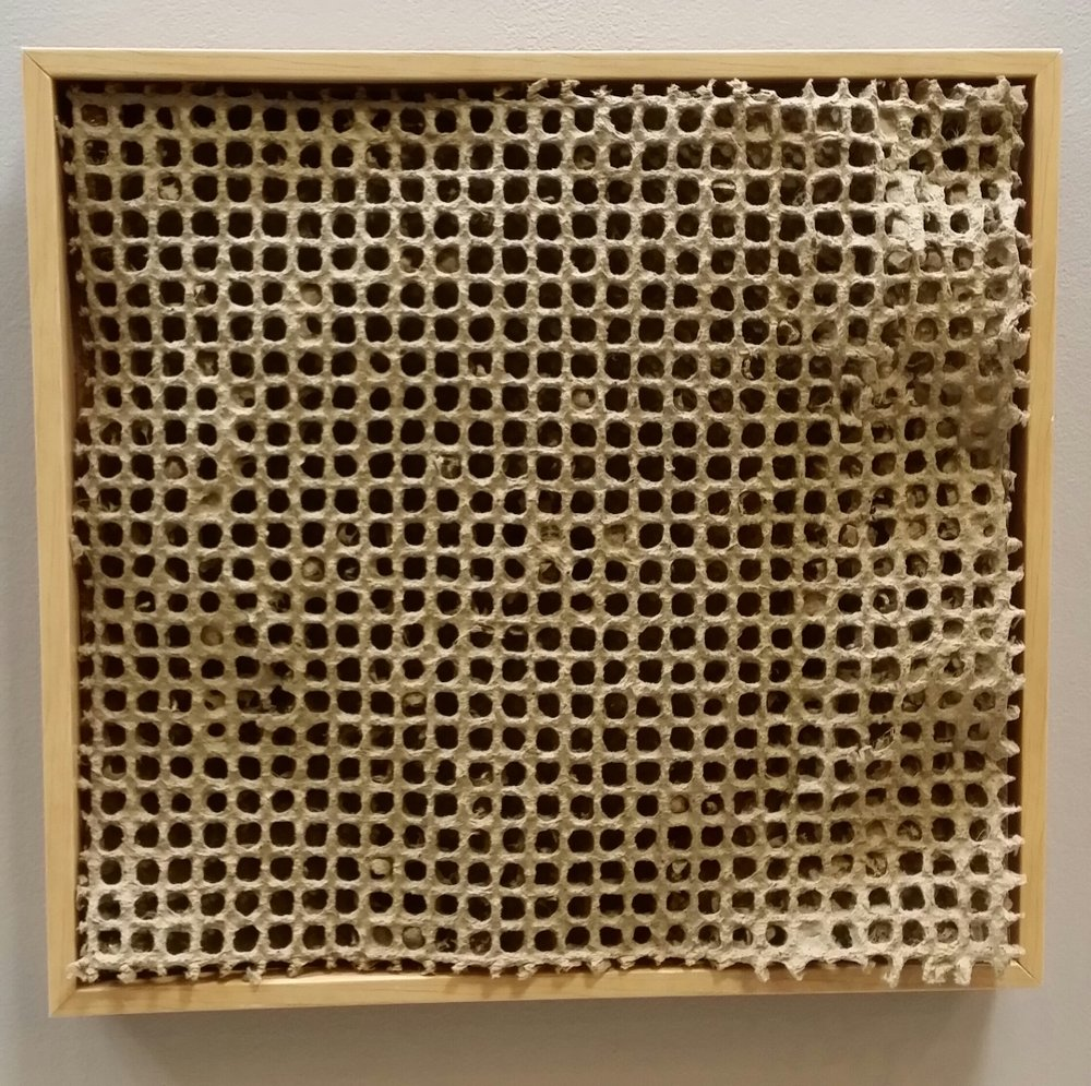 DAWN WOHLFORD  - Bettendorf, IA   Cellular   handmade sisal paper