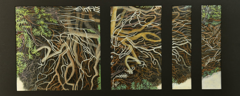 GREG THATCHER  - Fairfield, IA   Yew Tree Quadriptych   hand colored giclee print, $2,250