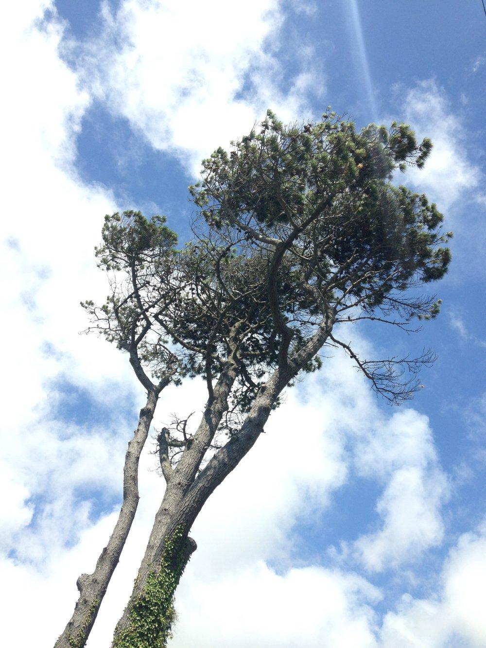 A sky full of tree