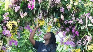 Orchids at Kew