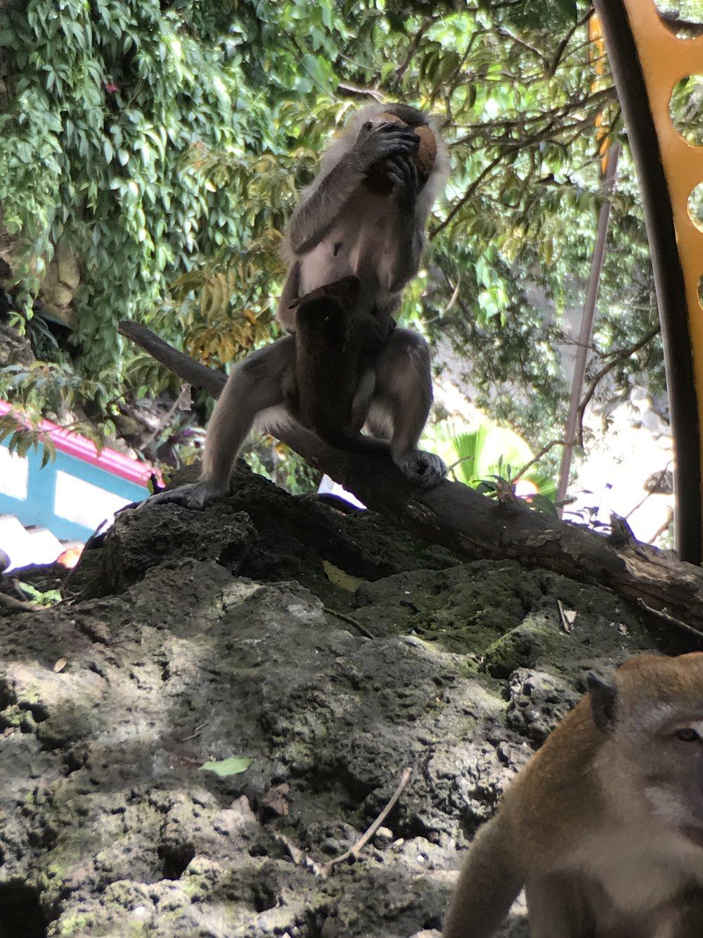 monkeys2