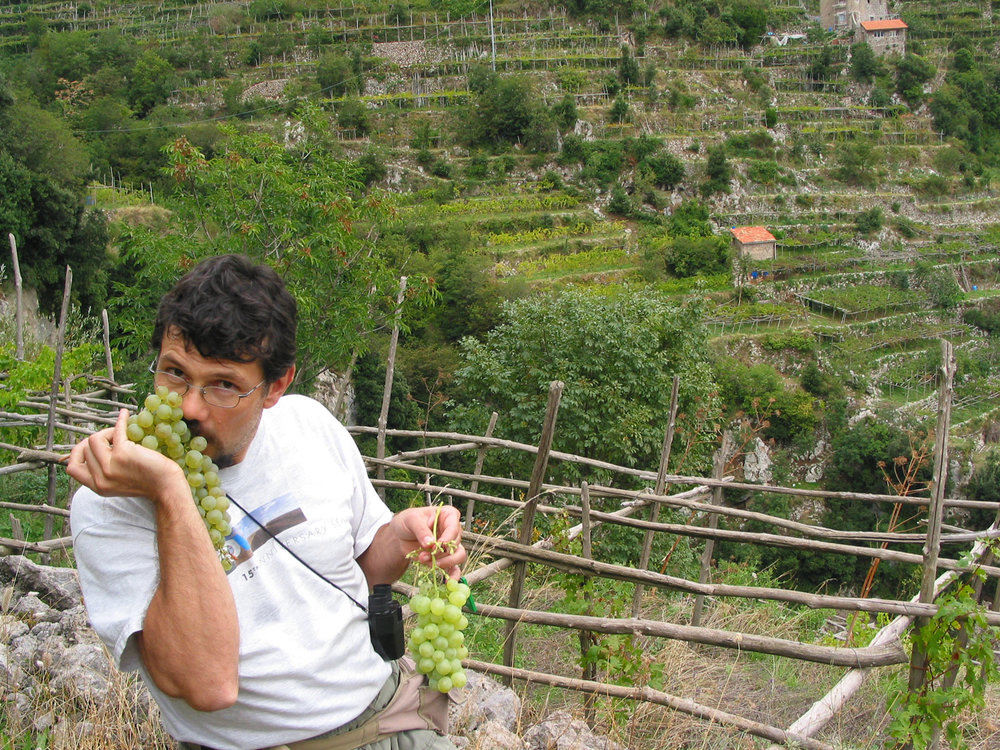 amalfi coast hiking tours