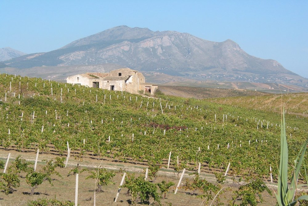 sicily-wine-tour-2427