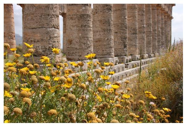 Sicily_flowers