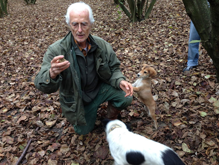 truffle hunt piedmont
