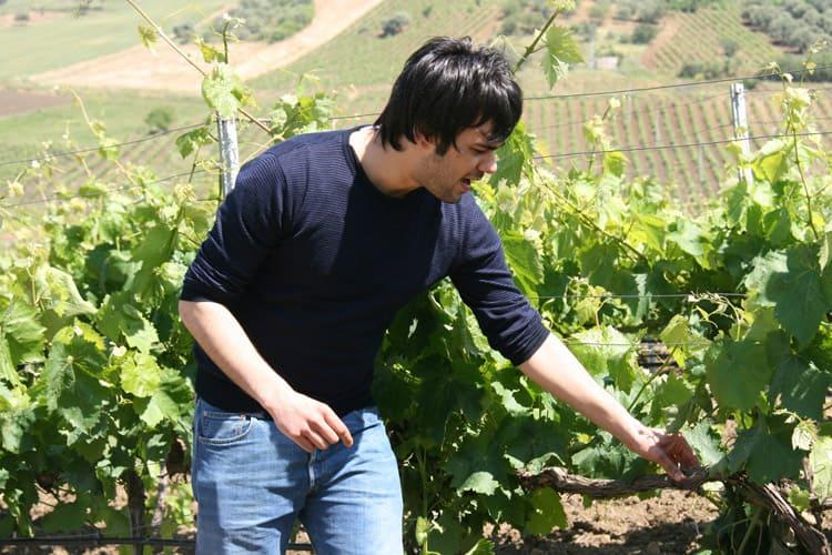 wine tours sicily