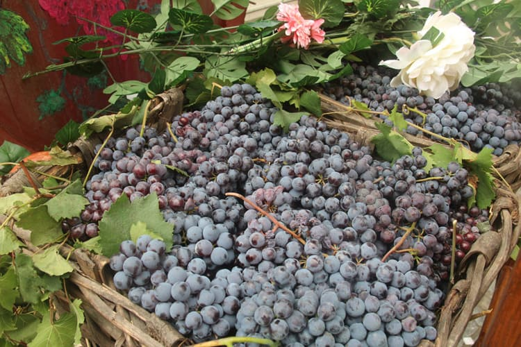 barolo wine tours