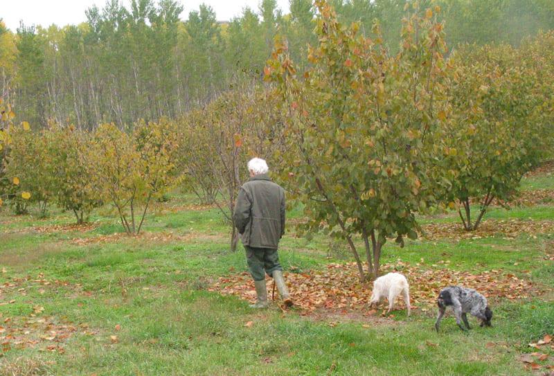 piedmont truffle hunt