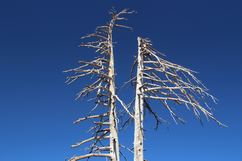 The skeletal remains of heat-blasted trees