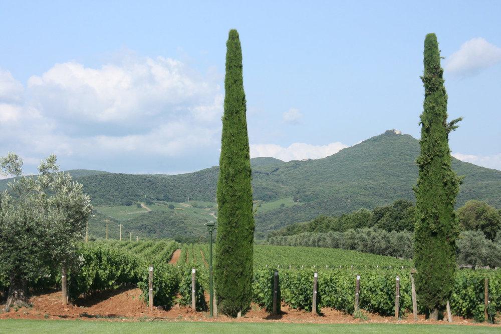 Castiglioncell on the hilltop, seen from Ornellaia's estate