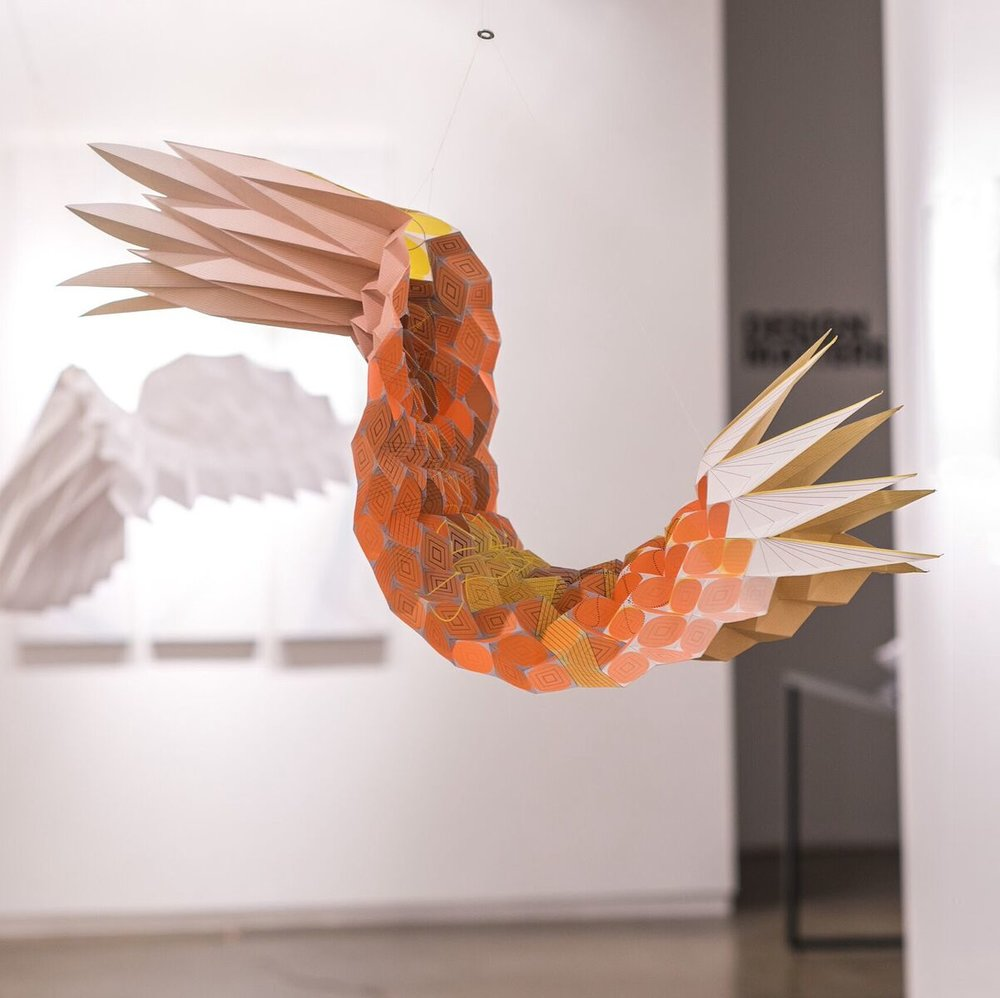 The Shrimp.jpeg