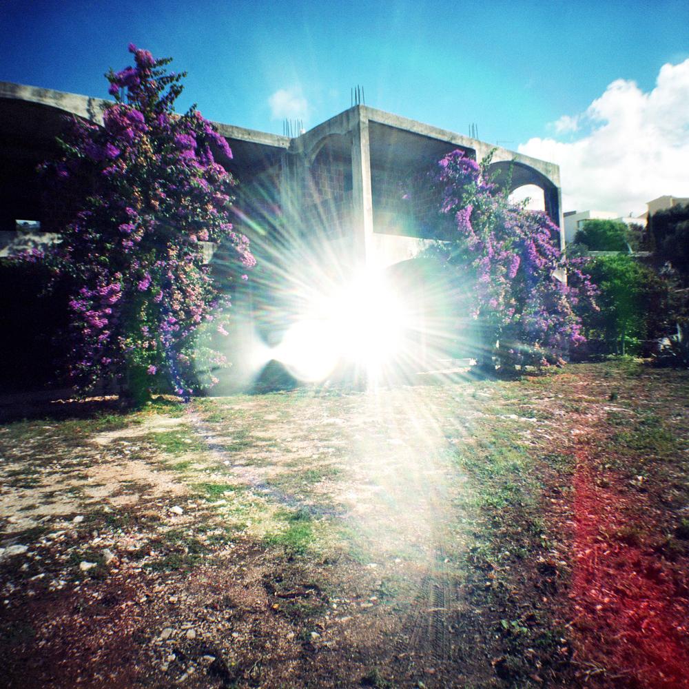 purpleflowers2.jpg