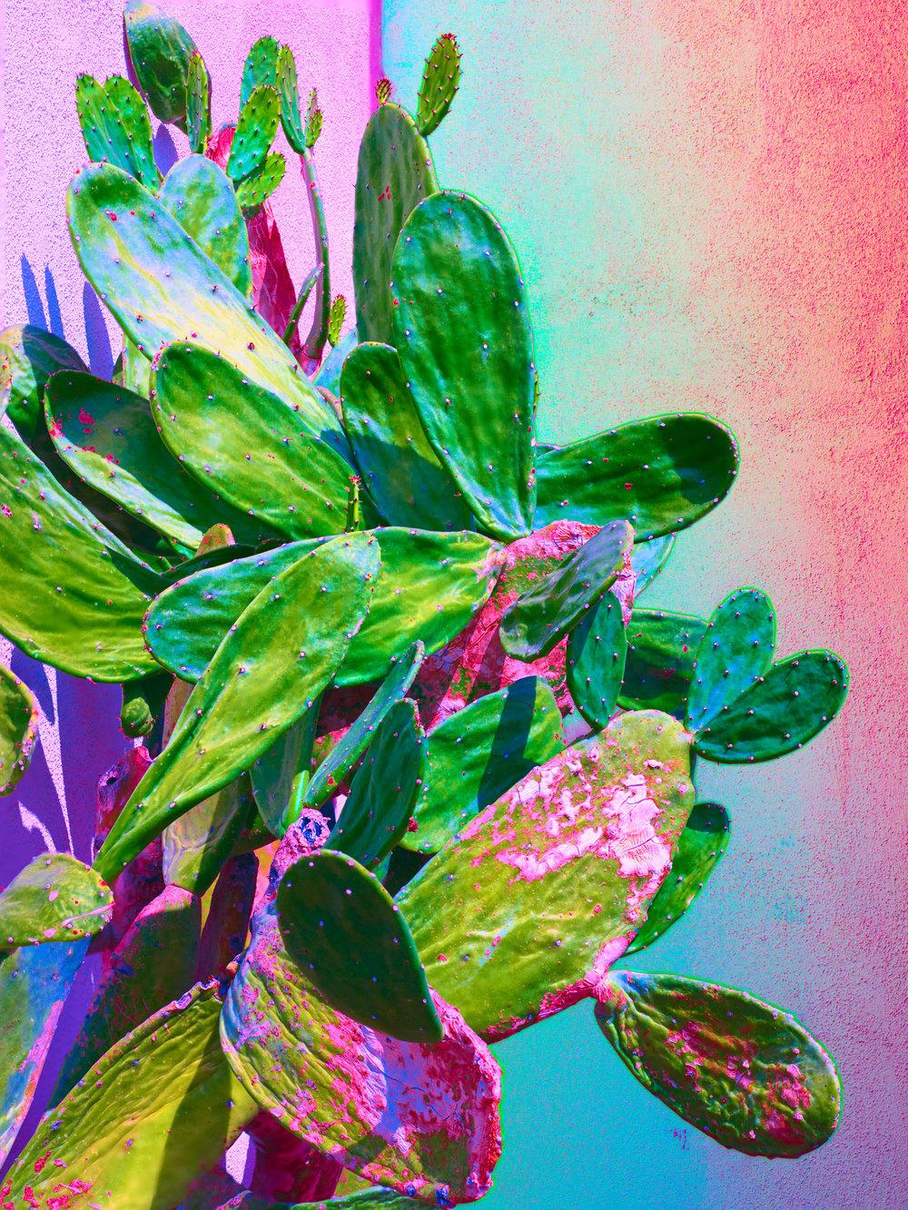 Marten Elder - pr 33 (cactus).jpg