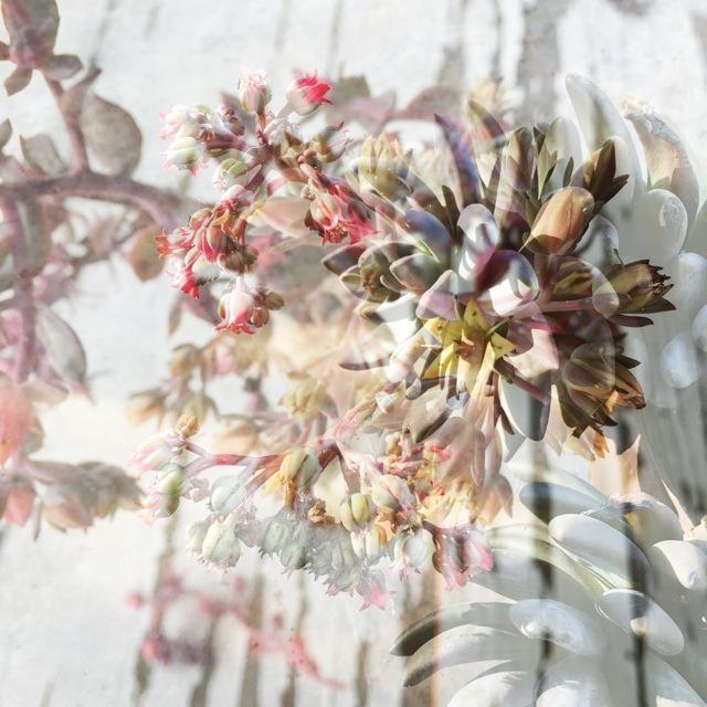 botanicals 32.jpg