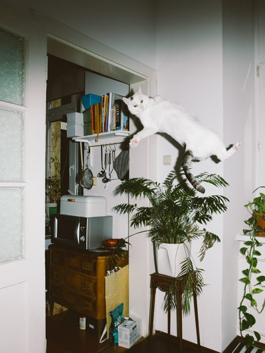 01_catcal_Gebhart_de_Koekkoek.jpg