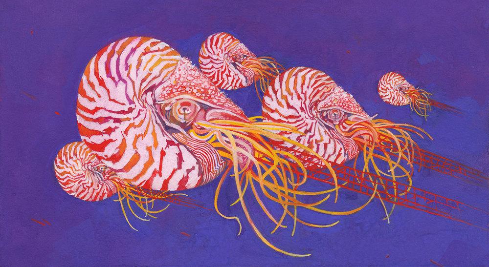 Nautilus-HIRES.jpg