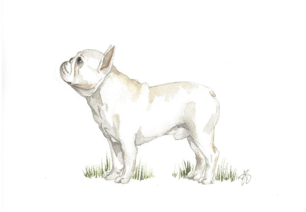THEGRANDSKETCHFrenchBulldog (1).jpg