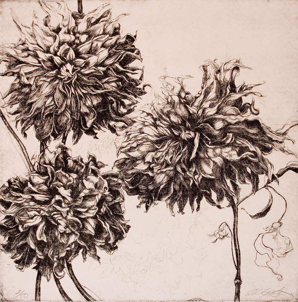 """Fall Dahlias"" Etching -14.5""x14.5"", Printed on a white archival cotton rag paper. With black oil based ink.-SOLD"