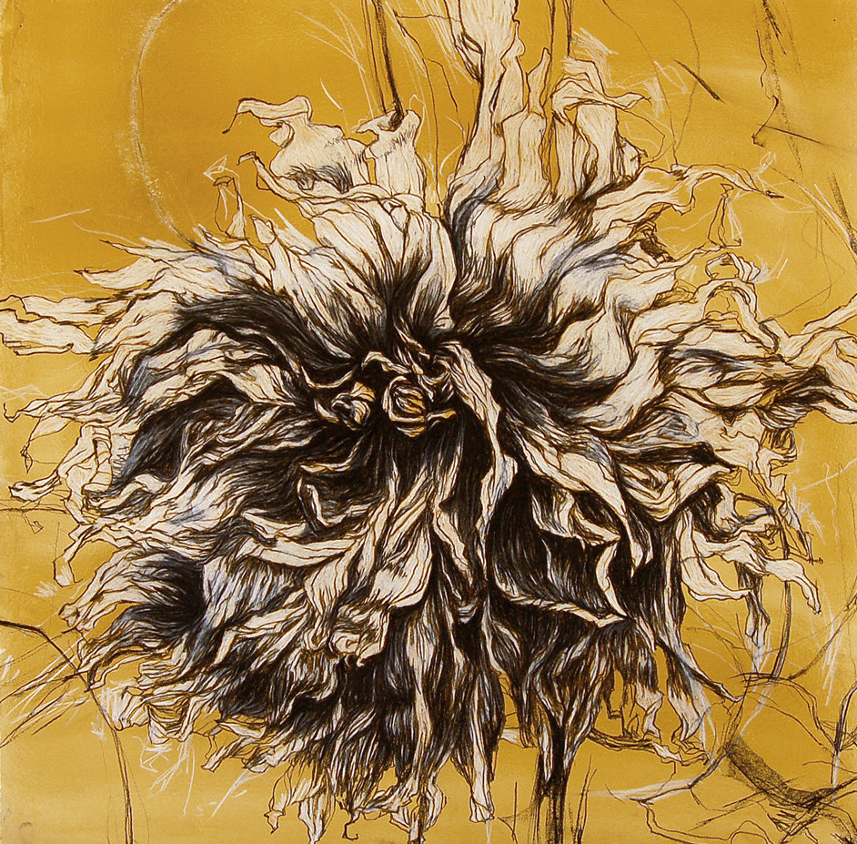 """Fall Dahlia IV""  30""x30"" Conte crayon and gouache on paper.-SOLD"