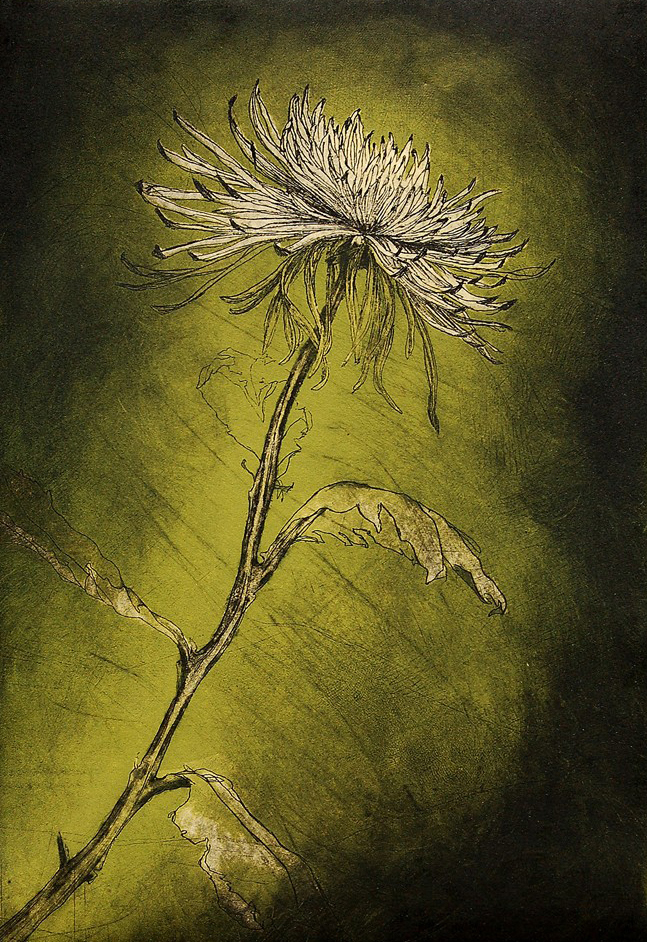 """Spider Mum"" Color etching / intaglio print, 11.75""x17"",  $650.00"