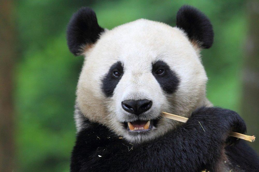 La diplomatie du Panda  Comédie écrite par Mehdi Ouahab et Marie du Roy Réalisée par Lionel Steketee Co-production Gaumont  En développement