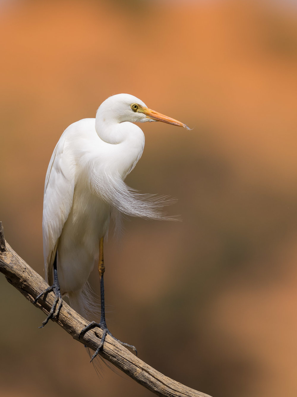 Egret and Dune