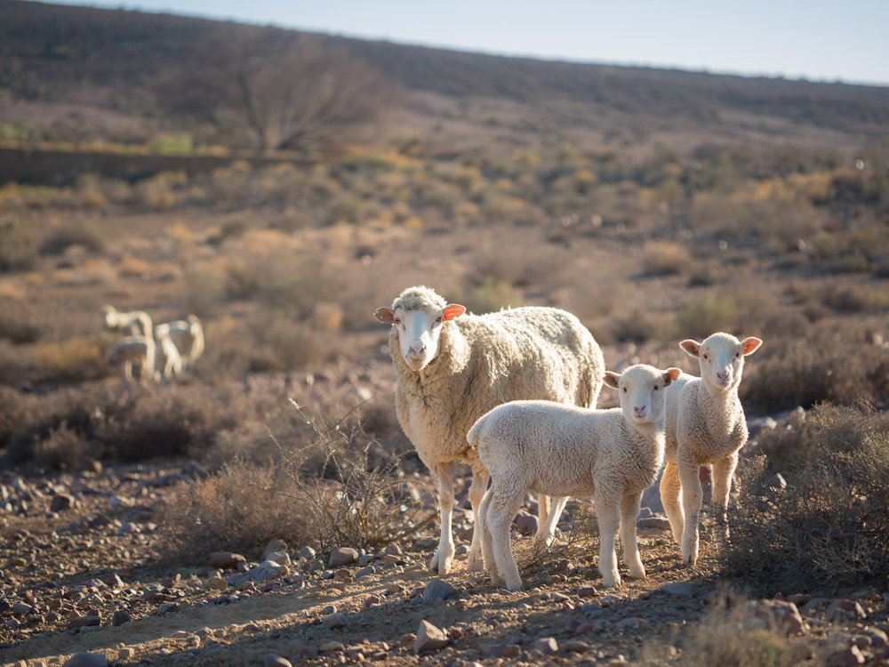 Gannabos Far, Nieuwoudtville, South Africa