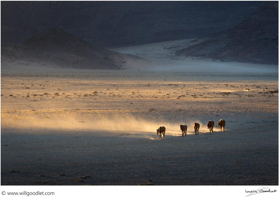 Wild Horses of the Namib, Garub Pan, Aus, Namibia.(Click for print details)