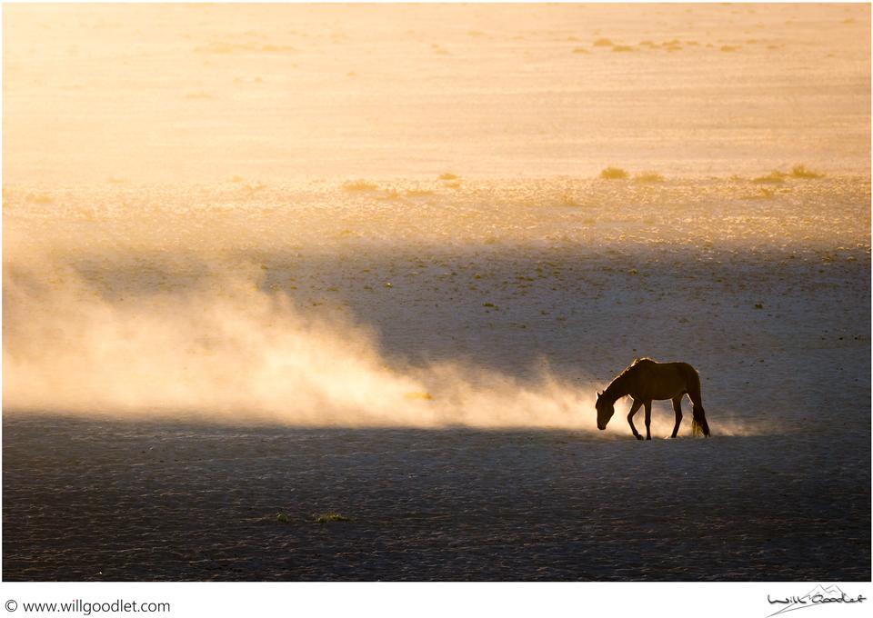 Namib horse at dawn, Garub Pan, Namibia.(Click for print details)