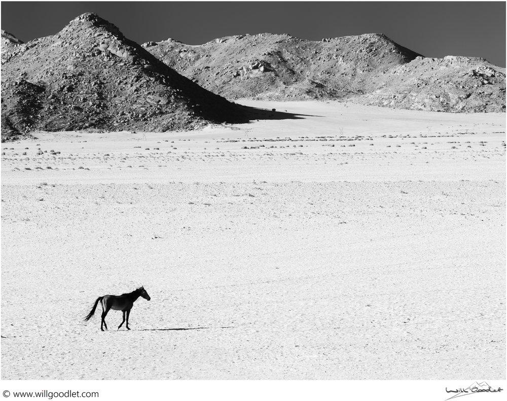 Lone Horse, Garub Pan, Aus, Namibia.(Click for print details)
