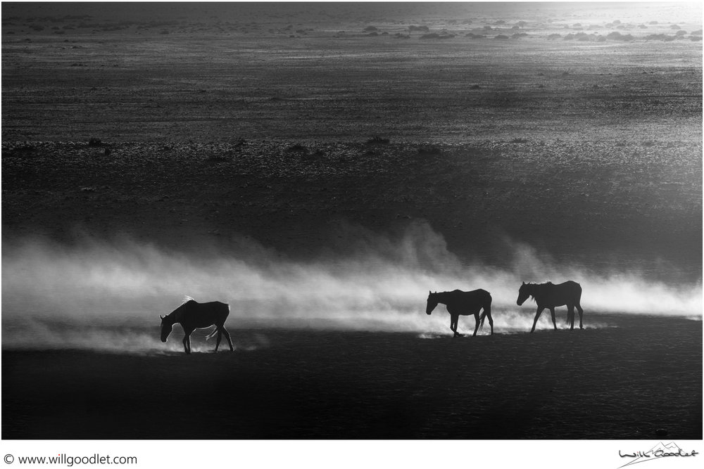 Horses in the morning dust, Garub Pan, Aus, Namibia. (Click for print details)