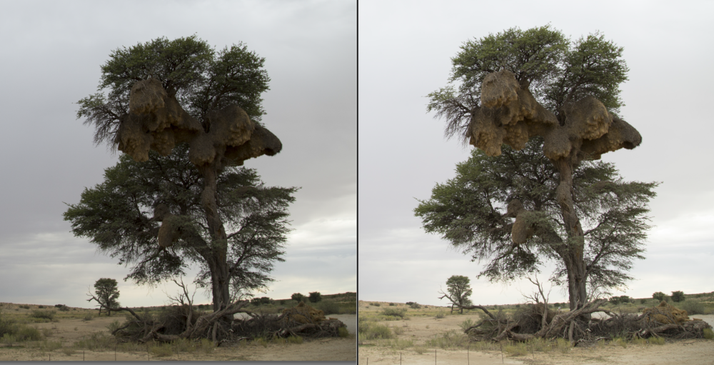 Exposure to the right comparison - Left (avg exposure camera meter) Right (compensated)