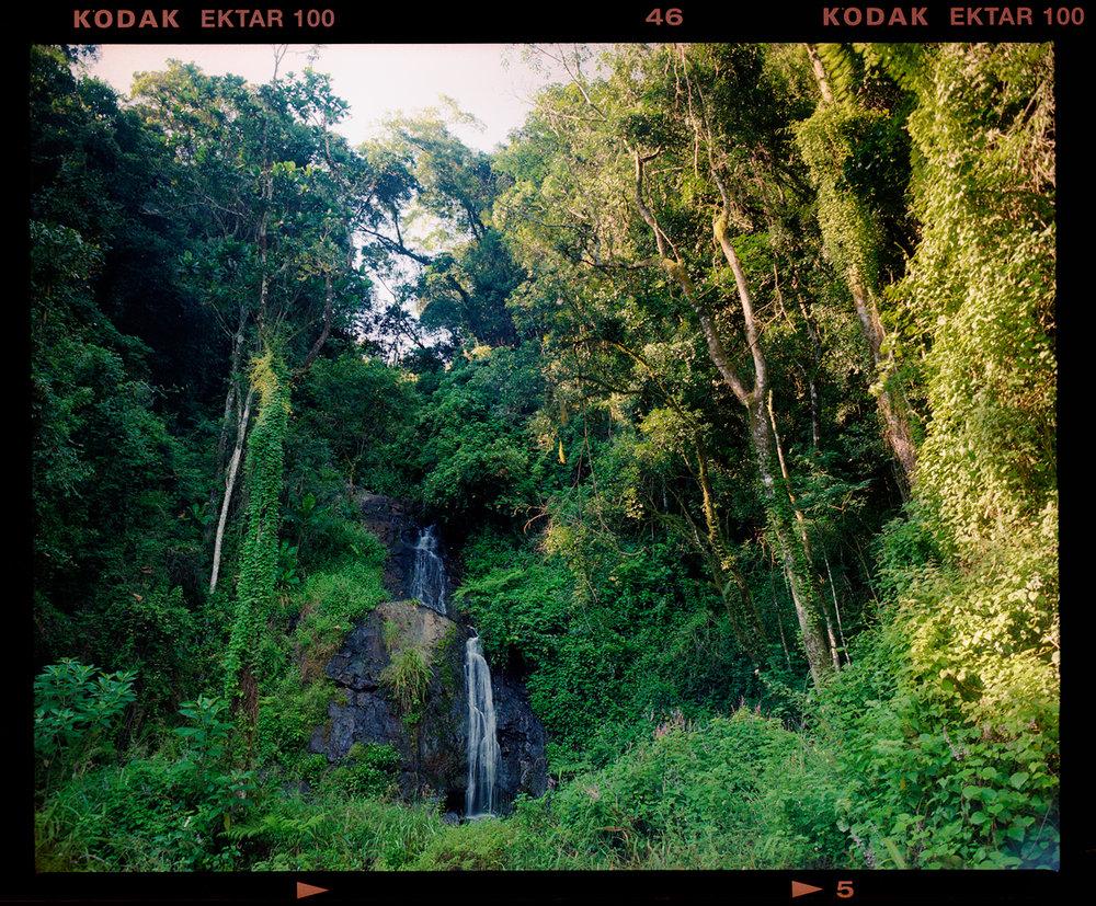 Mamiya RZ67 Pro ii + 55mm Rb lens - Kodak Ektar 100 - again with some leaks or developing flaws