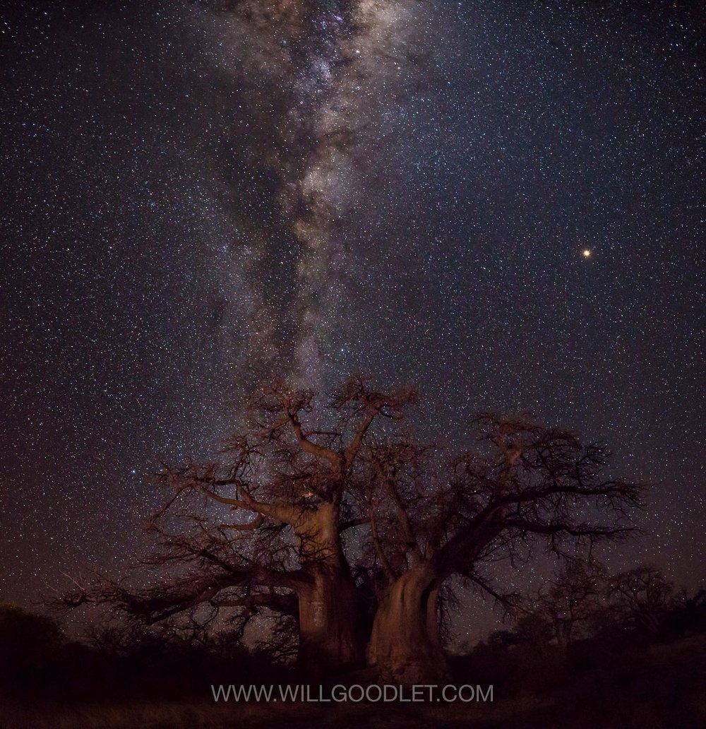 The big Baobab with Mars overhead, Canon 5D Mark iii + Sigma 14-24 F2.8 Art - ISO 10000, F2.8, 8 Seconds (Stitched stacks of 4)