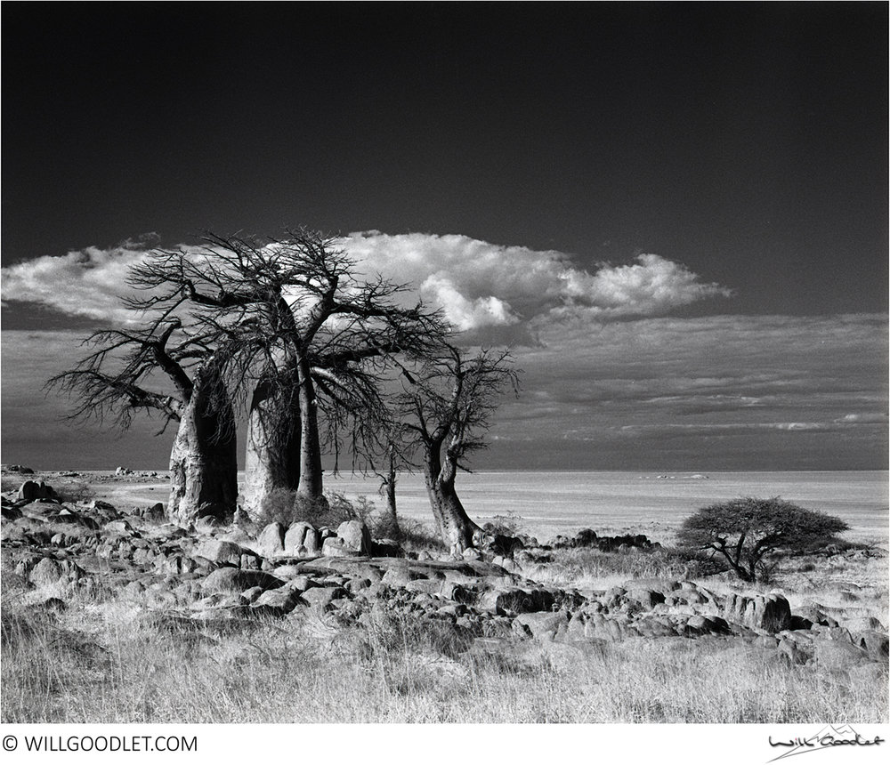 Baobabs and Thunderhead, Kodak Tri-X 400