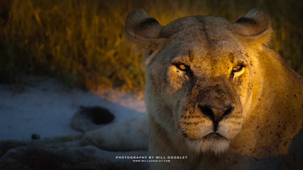 Pentax K100D + Tamron 70-300mm, Central Kalahari Game Reserve, Botswana