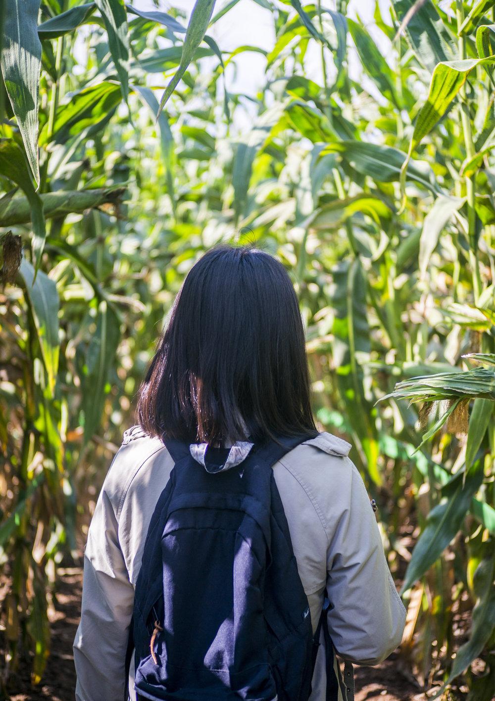 taves_farm.1015.jpg