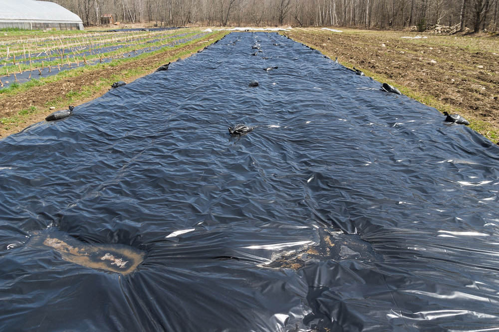 this is a tarped section of our field which will provide weed suppression before planting things like salad greens or carrots, photo by Adam Ford