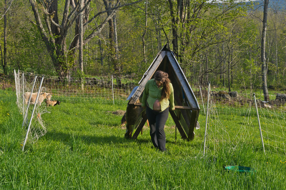Just moving the goat hut to their new weekly pasture at 7 months pregnant... I can't believe they let her lift that much here! Photo by Adam Ford.