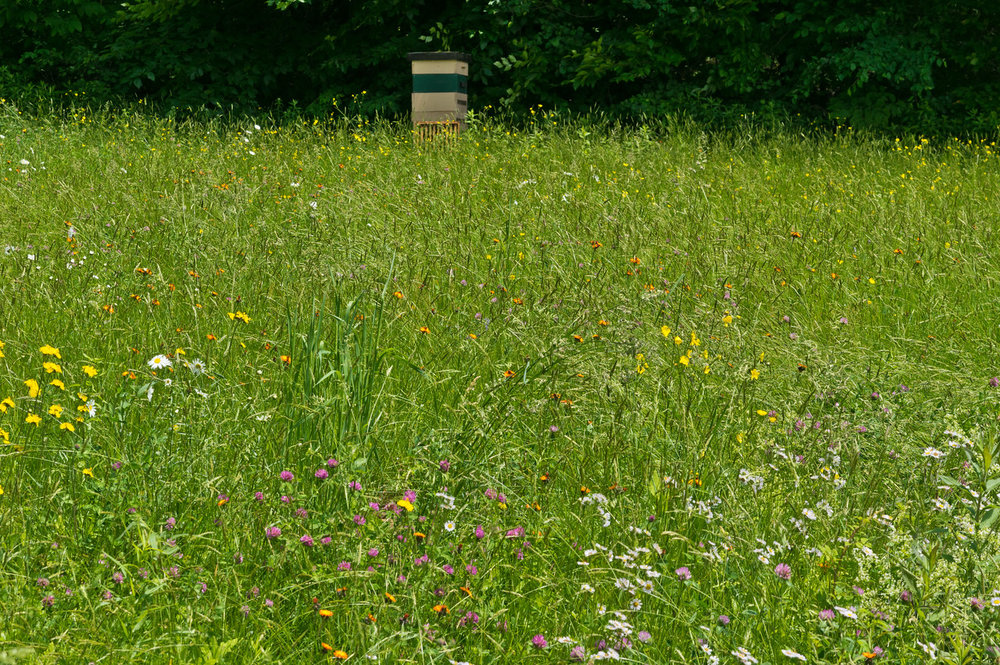 one of our hives on the edge of a wild flower field, photo by Adam Ford