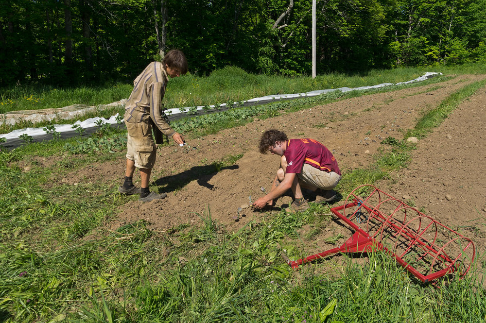 Shain tucking broccoli transplants into the ground, photo by Adam Ford.