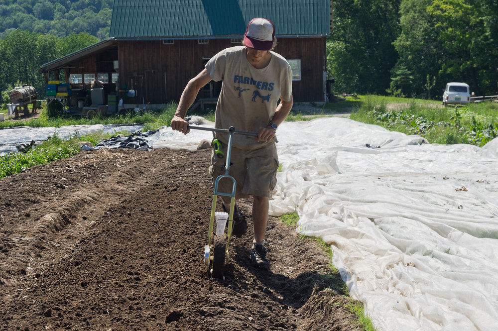 Ryan seeding the next round of fast brassicas, photo by Adam Ford