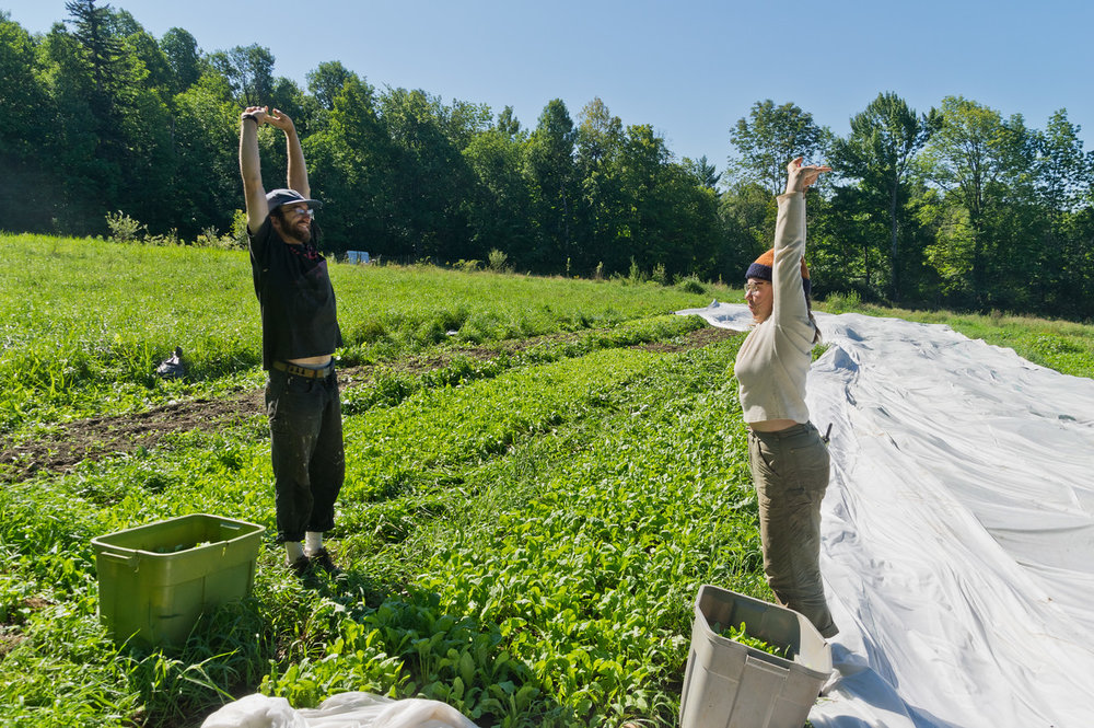 Morgan and Peter taking a break to stretch while harvesting greens... I learned at a farming conference years ago from a farmer many decads my senior, that if I wanted to farm into my future that we should reach up for one minute of every hour of bent over work, photo by Adam Ford