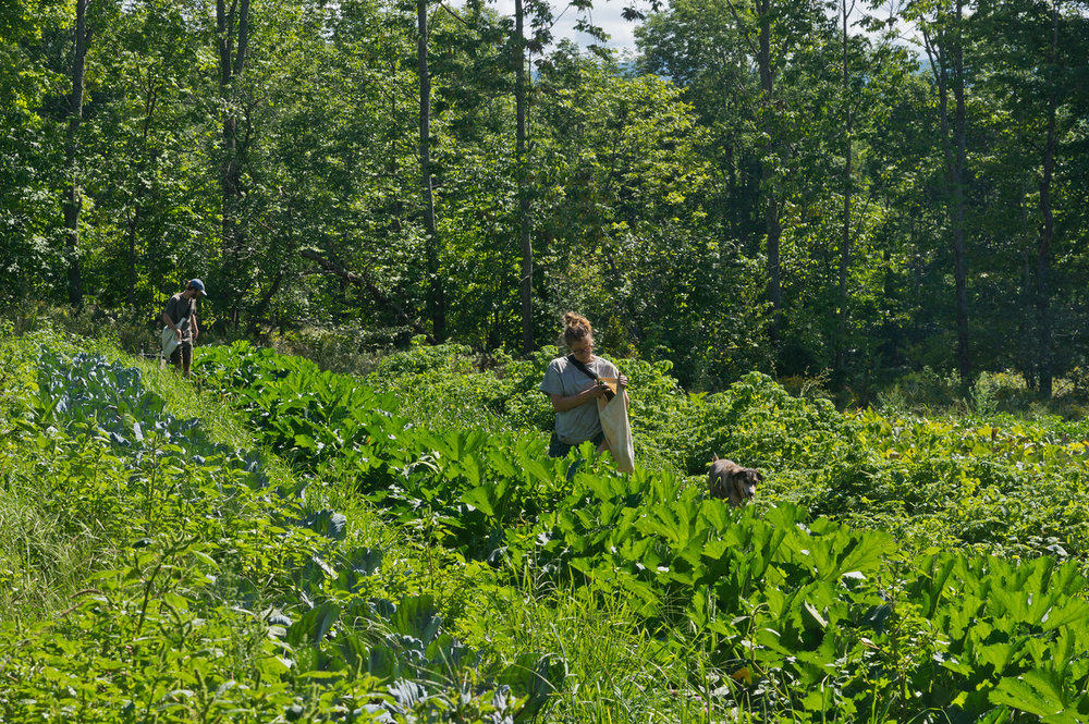 Peter and Mikayla harvesting zukes, photo by Adam Ford