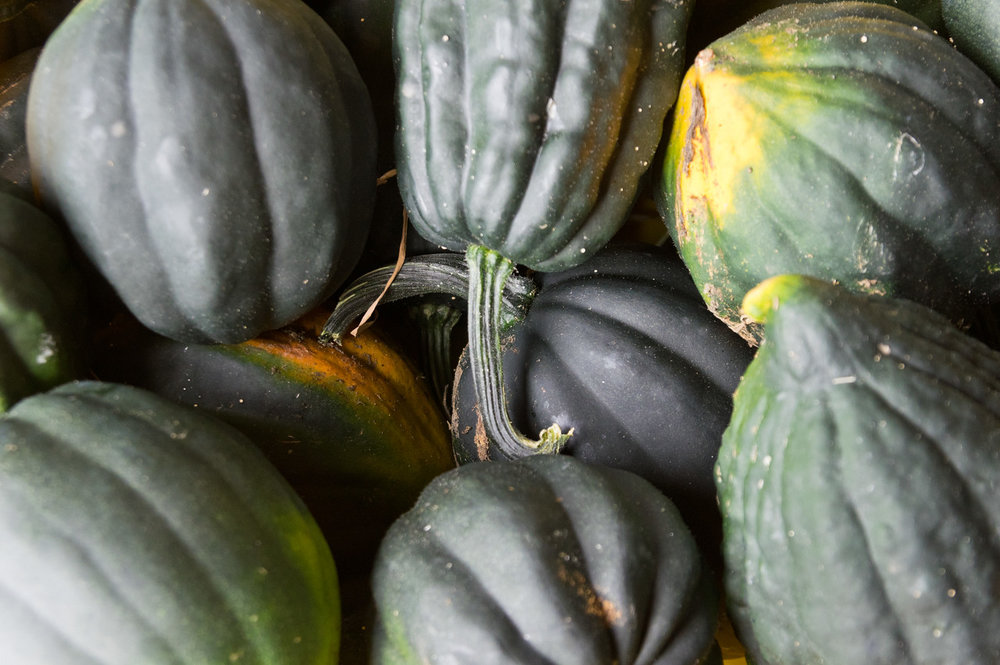 acorn squash, photo by Adam Ford