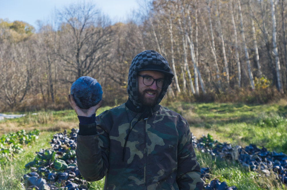 Peter harvesting red cabbage, photo by Adam Ford