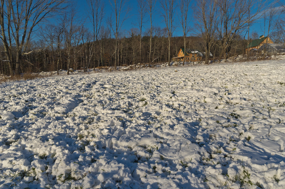 deer tracks in the snow, snacking on our cover crop, photo by Adam Ford