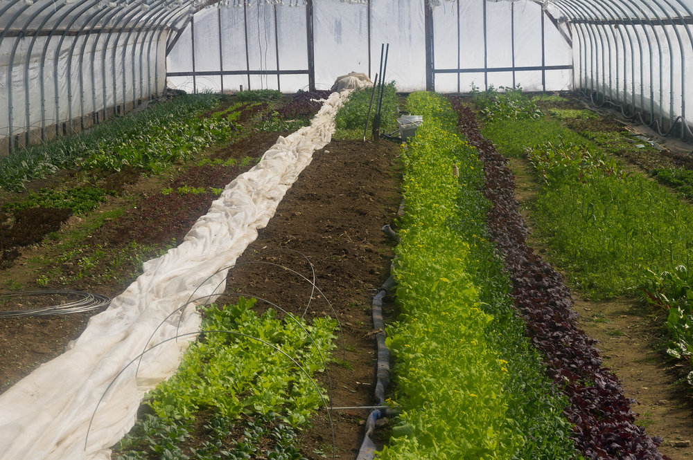 starting to transition some of the beds for spring! photo by Adam Ford