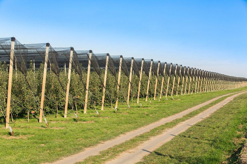 Orchard2.jpeg
